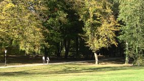 Natura spacer w jesieni Ludzie są walkin w jesień lesie zbiory