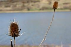 Natura Splended fotografia stock