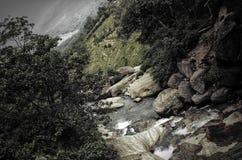 Natura - Sri Lanka Fotografie Stock Libere da Diritti