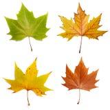 Natura stagionale di caduta di autunno del foglio Immagine Stock