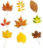 Natura stagionale di caduta di autunno del foglio Fotografia Stock
