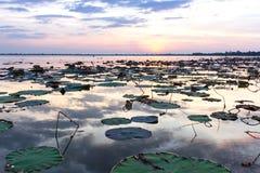 Natura, stagione, fondo Fotografia Stock