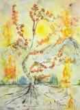 Natura su fuoco