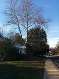 Natura suburbana Fotografia Stock Libera da Diritti