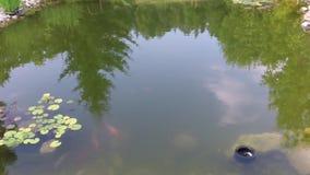 Natura sul fiume, vegetazione verde sulle banche del fiume Canne e piante verdi Lo stagno è una vista superiore dal fuco Th stock footage