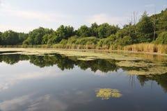 Natura. Sul lago fotografia stock libera da diritti