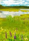 Natura svedese di estate Fotografia Stock