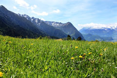 Natura in Svizzera Immagine Stock Libera da Diritti