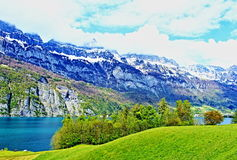 Natura Svizzera della molla della riva di Walensee Immagini Stock
