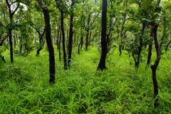 Natura tailandese Immagini Stock