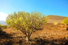Natura Tenerife Obraz Stock