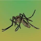 Natura, trasmettitore di malattia del trampolo delle zanzare Fotografia Stock