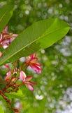 natura tropikalna Zdjęcia Stock