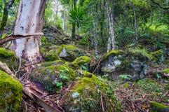 Natura, tropikalny las deszczowy w Lamington parku narodowym, Queensland, Austr Zdjęcia Royalty Free