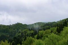 Natura in Tustan Fotografie Stock Libere da Diritti