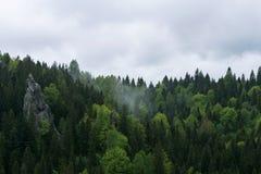 Natura in Tustan Fotografia Stock Libera da Diritti