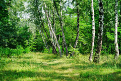 Natura Ukraina Myrhorod obraz stock