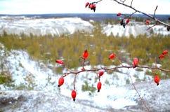 Natura Ukraina obraz royalty free