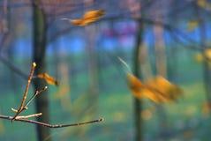 Natura unica illuminata Fotografia Stock