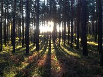 Natura Urals Obrazy Royalty Free