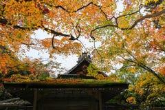 Natura variopinta davanti a costruzione giapponese Immagine Stock