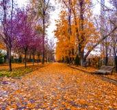 Natura variopinta nella scena di autunno Fotografie Stock Libere da Diritti