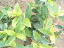 Natura verde fotografia stock