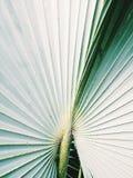 Natura verde Fotografia Stock Libera da Diritti