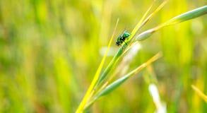 Natura verde con le cose viventi Fotografie Stock