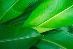 Natura verde della foglia del primo piano per fondo Immagine Stock