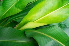 Natura verde della foglia del primo piano per fondo Fotografia Stock Libera da Diritti