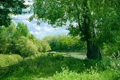 Natura verde della foresta Fotografia Stock