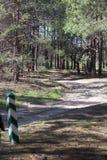 Natura verde della foresta Immagini Stock Libere da Diritti