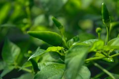 Natura verde per vita fotografia stock