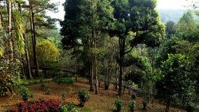 Natura Vietnam Fotografie Stock