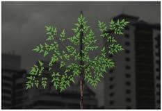 Natura vs urbanizacja obraz stock