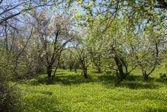 Natura w Byurakan obserwatorium Zdjęcia Royalty Free