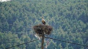 Natura w Greecethe naturze w Grecja filiates thesprotias; mpabis bagiastas obraz royalty free