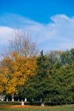 Natura w jesieni Kolor żółty, zieleni niebieskie niebo i drzewa i Fotografia Stock
