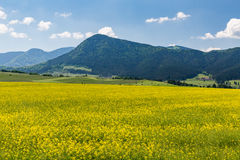Natura w Liptov regionie, Sistani w lecie 2015 Obraz Stock