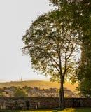 Natura W mieście Zdjęcie Royalty Free