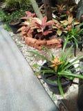Natura w ogródzie Zdjęcia Royalty Free