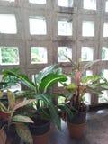 Natura w ogródzie Zdjęcie Stock