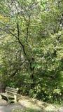 Natura w Ohio zdjęcie royalty free