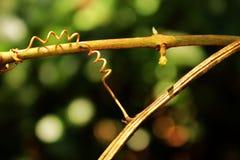 Natura w swój pięknej formie być Zdjęcia Royalty Free
