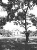 Natura w Thailand Zdjęcia Royalty Free
