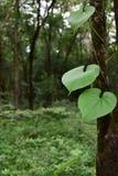 Natura w Thailand Zdjęcia Stock