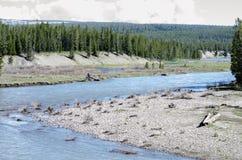 Natura w Yellowstone parku narodowym Zdjęcia Stock