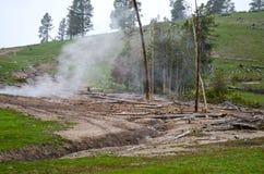 Natura w Yellowstone parku narodowym Obraz Stock