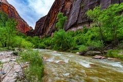 Natura w Zion parku narodowym, Utah obrazy stock